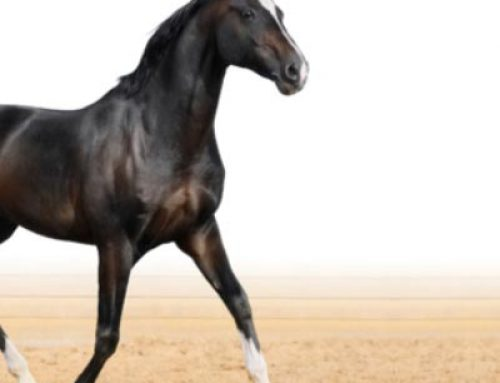 Sixty Signs of a Healthy and Happy Horse