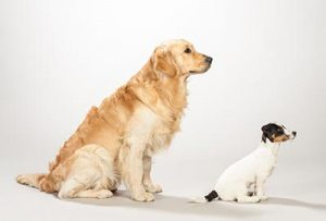 Side on view of golden retriever and terrier dog sitting together