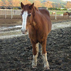 Horse standing in muddy paddock