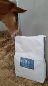 Foal trying to get into a bag of Vetpro Foal milk powder