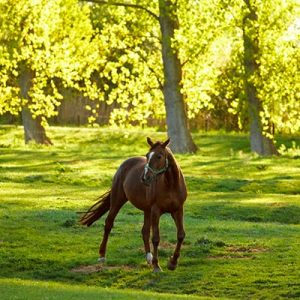 Horse is sunlit paddock exposed to sun and therefor creating Vitamin D