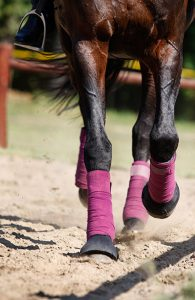 Horses legs bandaged, riding on sandy surface